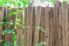 Stary drewniany ogrodzenie przerastający z bluszczem tło textured zdjęcia stock