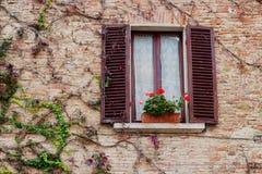 Stary drewniany okno przerastający z bluszczem w spadku barwi obrazy royalty free