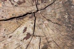 Stary drewniany ryzyko foremka przyrost Zdjęcie Stock