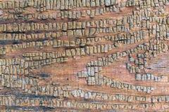 Stary drewniany tło z resztkami kawałki świstki stara farba na drewnie Tekstura stary drzewo, deska z farbą Zdjęcia Stock