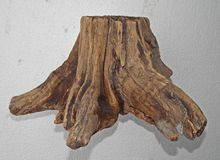 Stary drewniany tekstura fiszorka tło Obrazy Stock