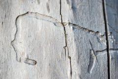 Stary drewno jako tło lub tekstura Fotografia Stock