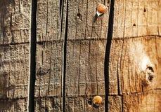 Stary drewno z ćwiekami obraz royalty free