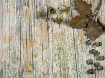 Stary drewno z jesienną dekoracją używać jako tło Zdjęcia Stock