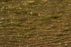 Stary drewno z liszajem Obrazy Royalty Free