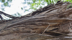Stary drzewa kostka do gry Zdjęcia Royalty Free