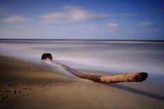 Stary drzewko palmowe dryfu drewno Obraz Stock