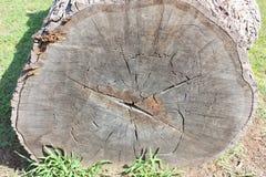Stary drzewnego fiszorka przekrój poprzeczny ilustracja wektor
