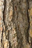 Stary drzewnej barkentyny tekstury zbliżenie Obrazy Royalty Free