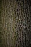 Stary drzewnej barkentyny zakończenie up Zdjęcie Stock