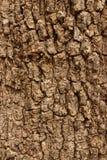 Stary drzewny bacground Obraz Royalty Free