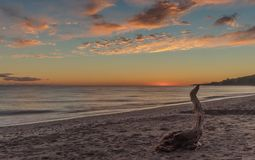 Stary drzewny bagażnik na plaży zdjęcia royalty free