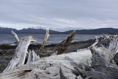Stary drzewny bagażnik na skalistej plaży zdjęcia royalty free