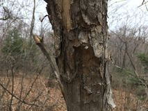 Stary drzewny bagażnik, zakończenie las jesieni Zdjęcia Royalty Free