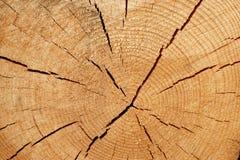 Stary Drzewny przekrój poprzeczny obrazy royalty free