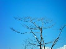 Stary drzewny występujący solo przeciw niebieskiemu niebu do Zdjęcia Stock