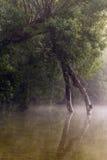 stary drzewo Obraz Stock