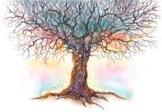 stary drzewo Zdjęcie Stock