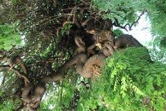 Stary drzewo Fotografia Royalty Free