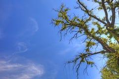 Stary drzewo i niebo jako tło zdjęcie stock