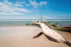 Stary drzewo na plaży z niebieskim niebem i długim ujawnieniem obrazy royalty free