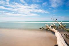 Stary drzewo na plaży z niebieskim niebem i długim ujawnieniem zdjęcia royalty free