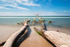 Stary drzewo na plaży z niebieskim niebem i długim ujawnieniem obraz royalty free