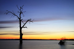 Stary drzewo w jeziorze przy zmierzchu krajobrazem Fotografia Royalty Free