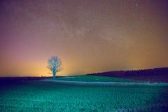 Stary drzewo w Latvian łące Obrazy Stock