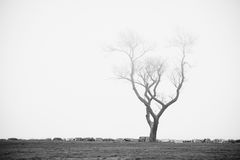 Stary drzewo w ocean plaży parku z ranek mgłą Melancholijny smutny nastrój Obraz Stock