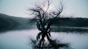 Stary drzewo w wodzie na jeziorze zdjęcie wideo