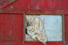 Stary drzwi i Łamany okno Fotografia Royalty Free