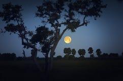 Stary duży drzewa i księżyc w pełni wieczór Obrazy Stock