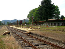 Stary dworzec z sheeps w południe Chile Fotografia Royalty Free