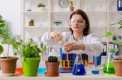 Stary ?e?ski biotechnologia chemik pracuje w lab zdjęcia royalty free