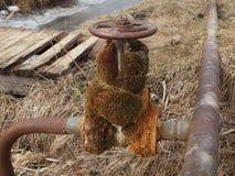 Stary faucet przerastający z mech na starej ośniedziałej instalaci wodnokanalizacyjnej zdjęcia royalty free