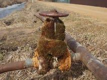Stary faucet przerastający z mech na starej ośniedziałej instalaci wodnokanalizacyjnej obrazy royalty free
