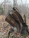 Stary fiszorek las jesieni Obrazy Royalty Free
