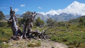Stary fiszorek przed Corsica górami zdjęcia stock