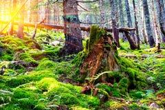 Stary fiszorek w lesie Zdjęcie Stock