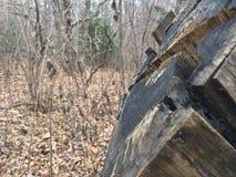 Stary fiszorek, zakończenie las jesieni Obrazy Royalty Free