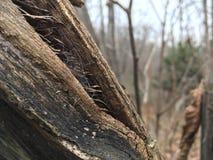 Stary fiszorek, zakończenie las jesieni Obraz Royalty Free