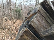 Stary fiszorek, zakończenie las jesieni Zdjęcia Royalty Free