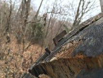 Stary fiszorek, zakończenie las jesieni Obrazy Stock