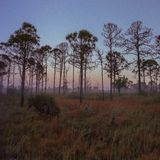 Stary Floryda wschód słońca zdjęcia royalty free