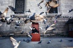 Stary fotograf w budka Zdjęcie Stock