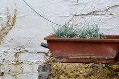 Stary garnek z sfałszowanymi kwiatami Fotografia Stock