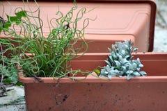 Stary garnek z sfałszowanymi kwiatami Fotografia Royalty Free