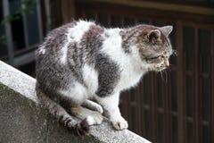Stary gderliwy kot obrazy royalty free