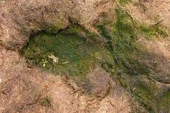Stary gnicie zbierająca trawa w dużym zielonym odoru kopu w kącie ogród Organicznie użyźniacz Obrazy Royalty Free